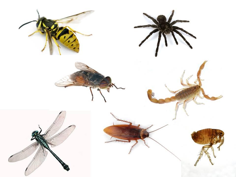 insectos enfermedades: