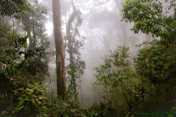 01 Viajfilos en Panama. Sendero Quetzal 04