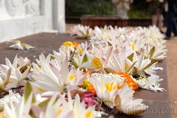 03 Viajefilos en Sri Lanka. Mihintale 28