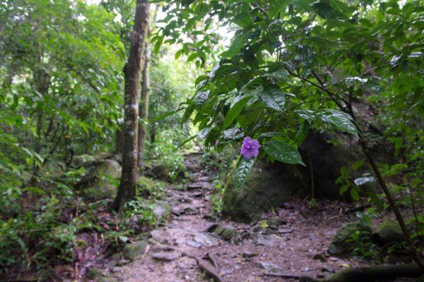 Valle de Anton de Panamá