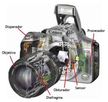 Las partes de la cámara