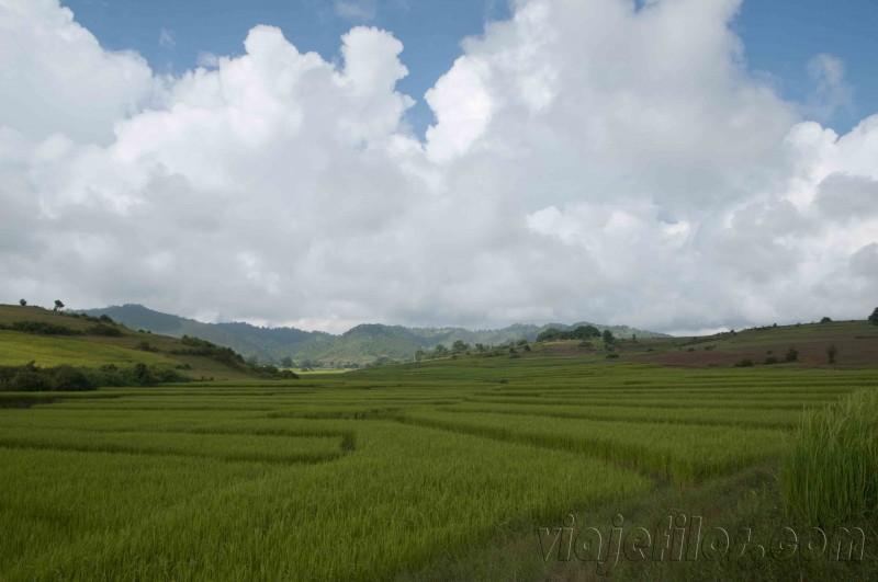 Los arrozales de Myanmar