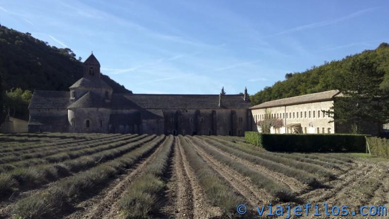 viajefilos-en-abadia-de-senanque-003