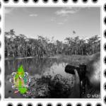 Tres días en el Amazonas de Perú: Iquitos