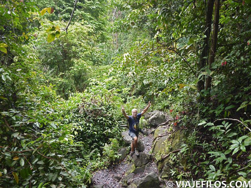 jungla del parque nacional de Bako