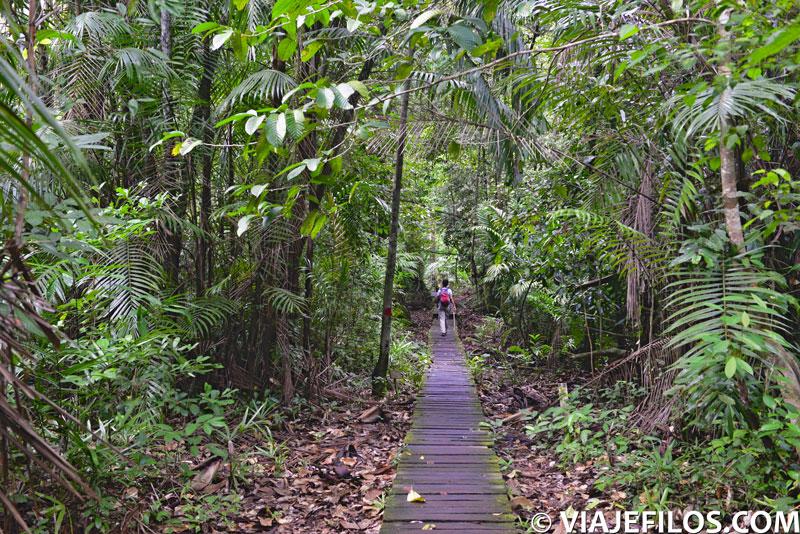 Inicio del sendero Lintang en el parque nacional de Bako
