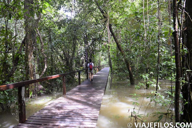 Las pasarelas inundadas de Gunung Mulu NP