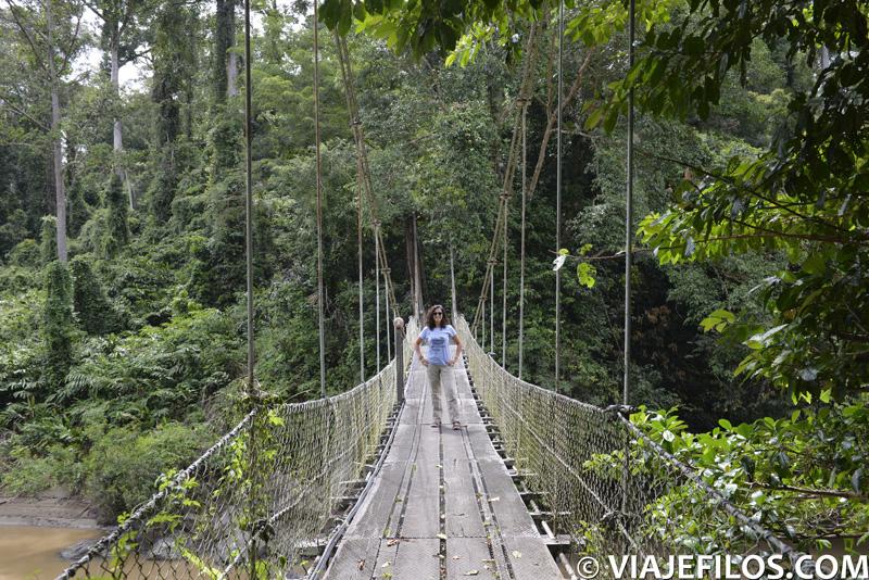 Puente colgante sobre el río en el Danum Valley de Borneo