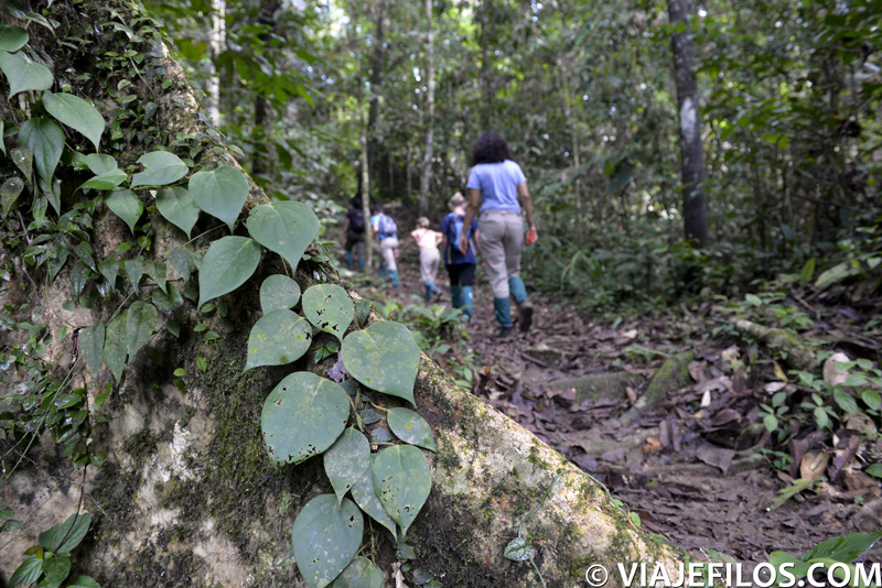 trekking en la jungla del Danum Valley