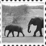 Un deseado paseo por el sur de África II: Kruger, Chobe y Victoria