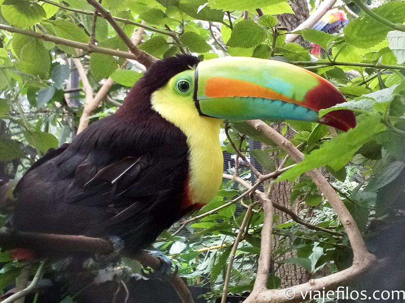 La mejor fauna del planeta en Costa Rica