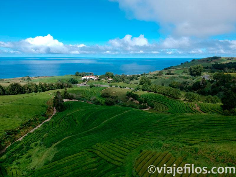 Plantaciones de té de Gorreana en Sao Miguel de Azores