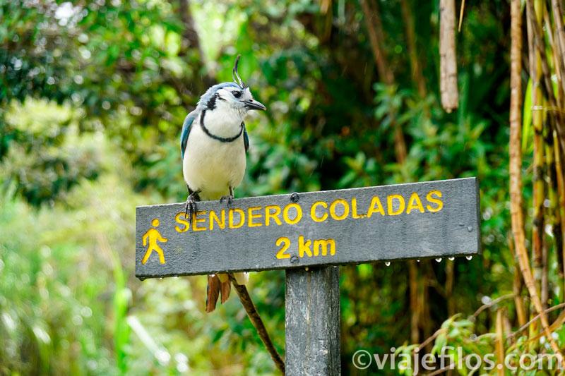 Los senderos del PN del volcán Arenal