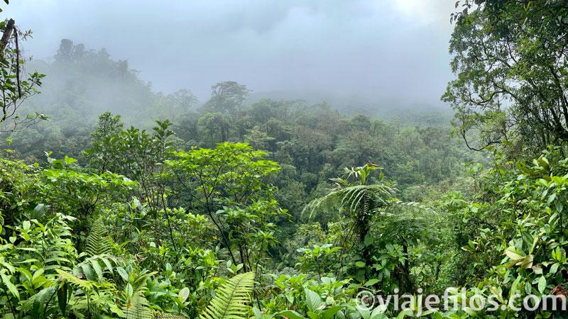 Bosque lluvioso Rio Celeste Costa RIca