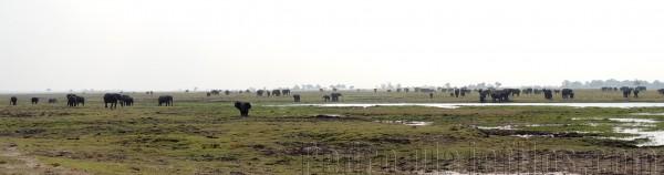 Manadas de mamíferos en el Parque Nacional de Chobe