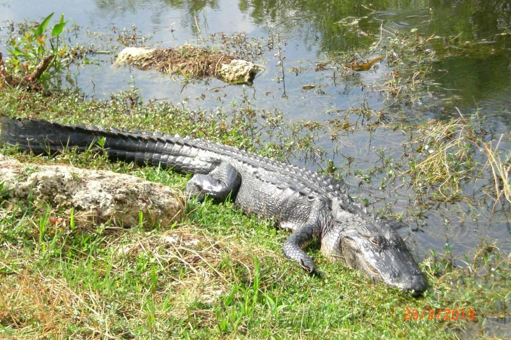 Los animales de Miami