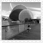 Oceanogràfic de Valencia, un paseo submarino