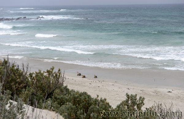 Como llegar hasta Seal Bay en Kangaroo